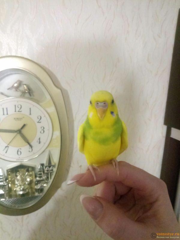 У попугая шелушится клюв и восковица - P91111-164538.jpg