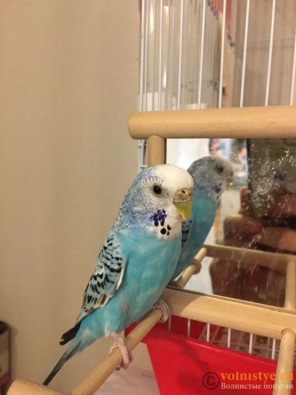 Помогите определить здоров ли попугай? - kesha_2.jpeg
