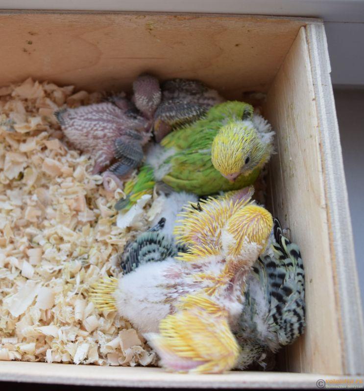 Гнездование Михаэля и Юлии - гнездо 21.11.JPG