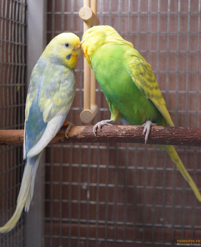 Гнездование Михаэля и Юлии - родители 2.JPG