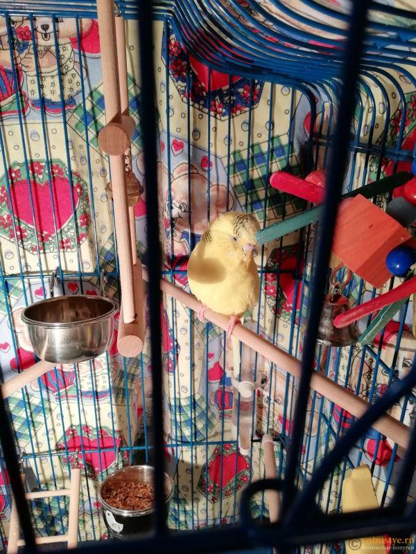 Вялый, нахохленный попугай. Всегда спит - IMG_20191130_192209.jpg