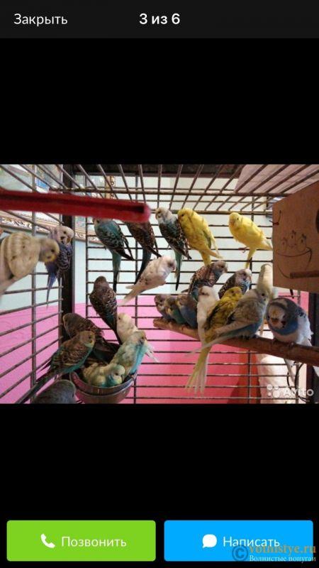 Содержание птиц у заводчика - 65C69DAB-EBA6-4003-A29F-E4183880DA50.jpeg
