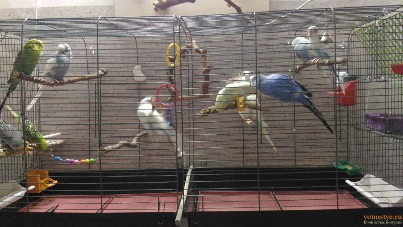 Мои птички - P_20200109_230843.jpg