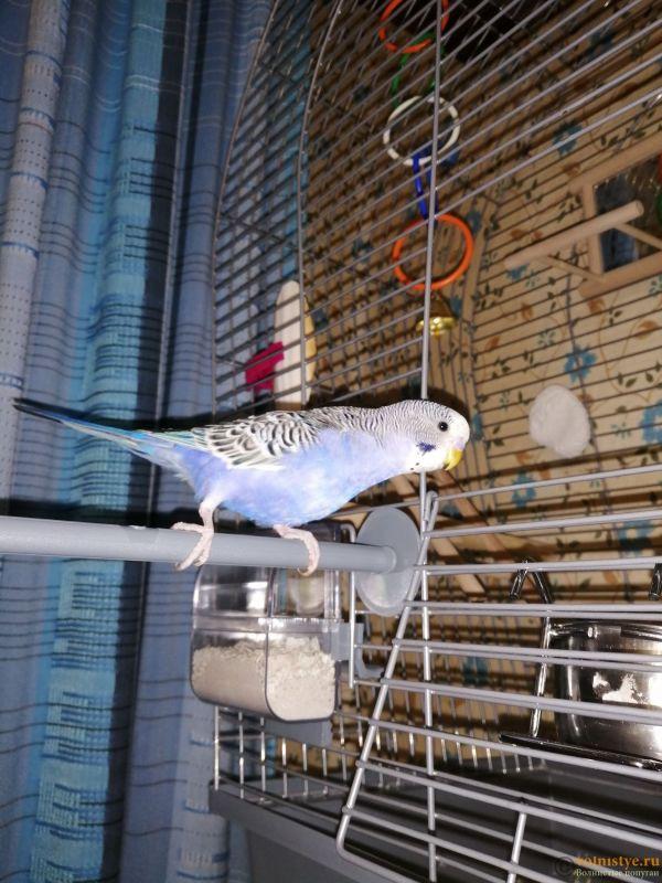 Попугай на сегодняшний день - IMG_20200115_201158.jpg
