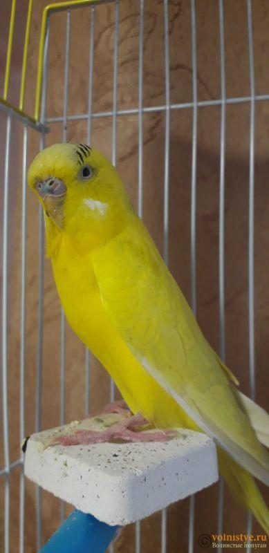 У попугая шелушится клюв и восковица - hTgLZhRKHqs.jpg