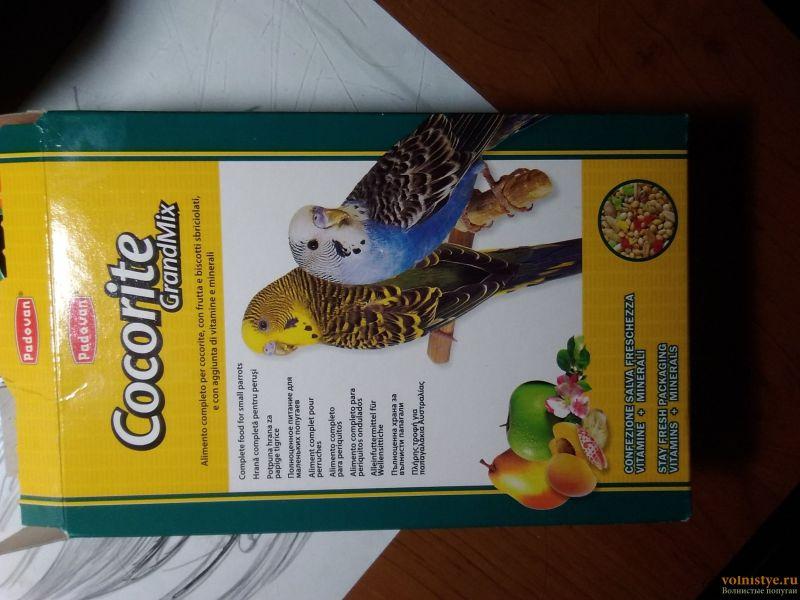 У попугая шелушится клюв и восковица - pic1583250672399.jpg