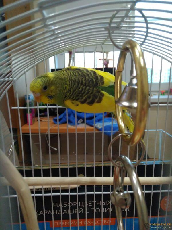 Фотографии  для статьи  окрасы волнистых попугаев - IMG_20200313_184023.jpg