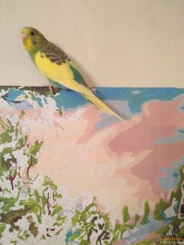 Фотографии  для статьи  окрасы волнистых попугаев - IMG_20200316_143709.jpg